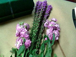 Purple flowers for julie