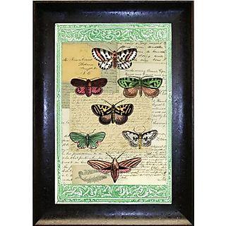 John derian butterfly