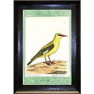 John derian bird print